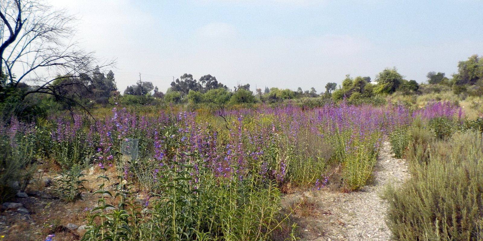 California Is A Big State, With Ecosystems Ranging From Sand Dunes To  Desert, Forest, Shrubland, And Swamp. The Most Water Wise Plants For Any  Garden Are ...